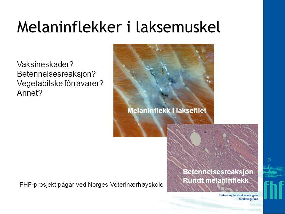 Melaninflekker i laksemuskel Vaksineskader.Betennelsesreaksjon.