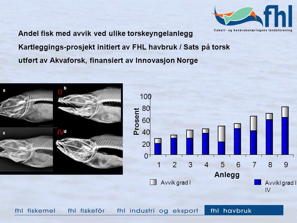 0 20 40 60 80 100 123456789 Anlegg Prosent Avvik grad I Avvikl grad II- IV Andel fisk med avvik ved ulike torskeyngelanlegg Kartleggings-prosjekt initiert av FHL havbruk / Sats på torsk utført av Akvaforsk, finansiert av Innovasjon Norge III IIIIV
