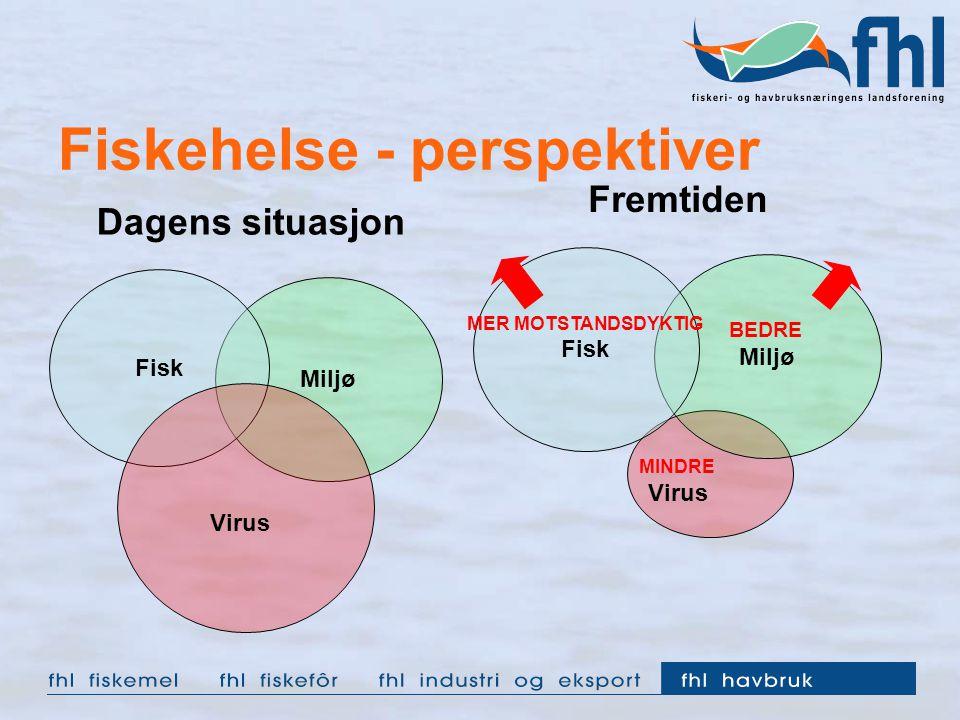 Miljø Fisk Fiskehelse - perspektiver Miljø Virus Fisk Virus Dagens situasjon Fremtiden MER MOTSTANDSDYKTIG BEDRE MINDRE