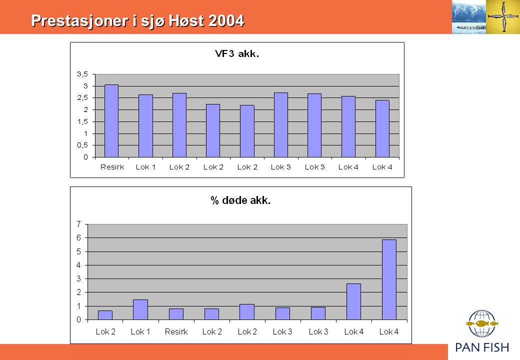 Prestasjoner i sjø Høst 2004