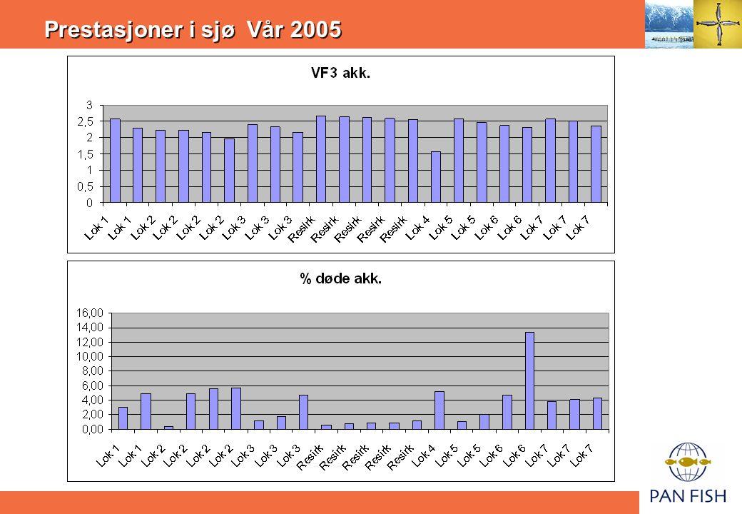 Prestasjoner i sjø Vår 2005