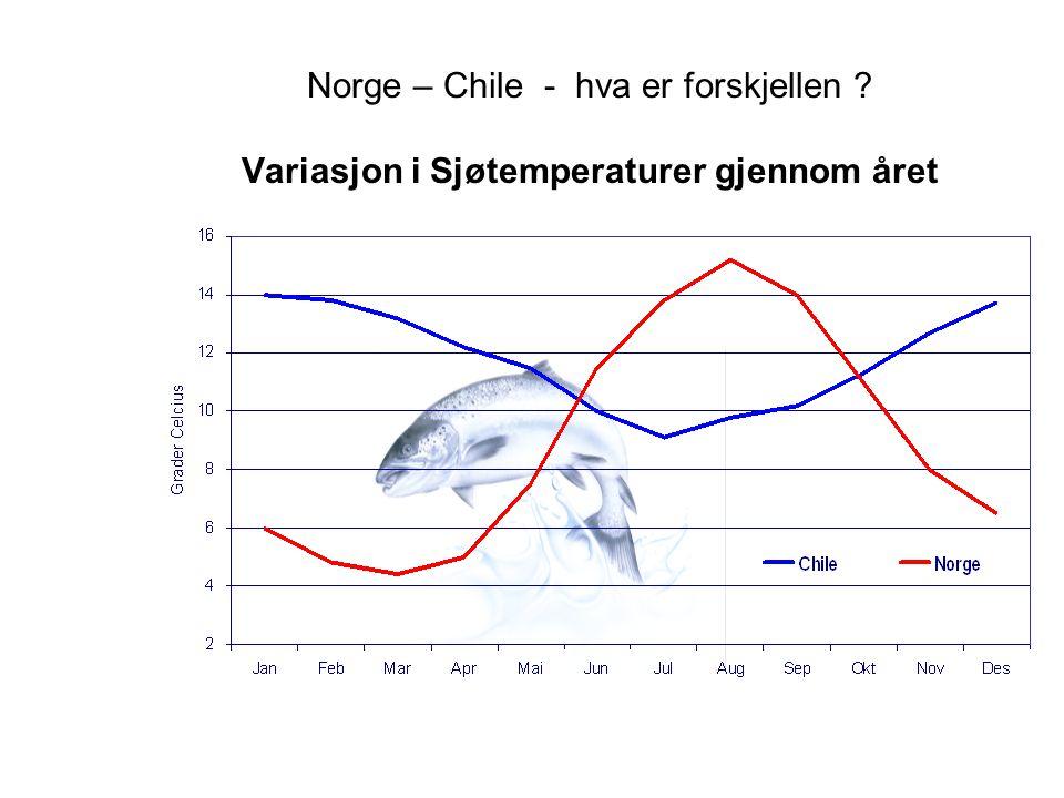 Norge – Chile - hva er forskjellen ? Variasjon i Sjøtemperaturer gjennom året
