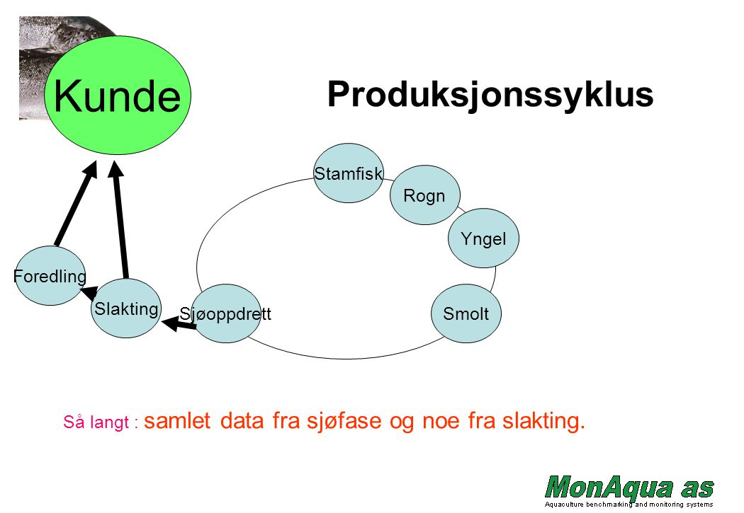 Foredling Slakting Sjøoppdrett Yngel Rogn Stamfisk Smolt Kunde Produksjonssyklus Så langt : samlet data fra sjøfase og noe fra slakting.
