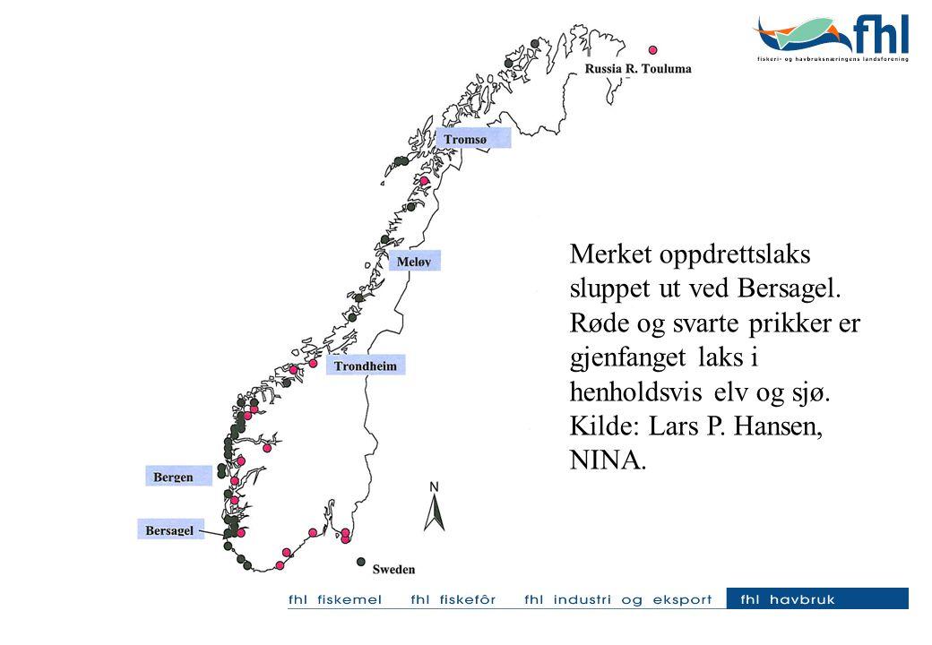 Merket oppdrettslaks sluppet ut ved Bersagel. Røde og svarte prikker er gjenfanget laks i henholdsvis elv og sjø. Kilde: Lars P. Hansen, NINA.