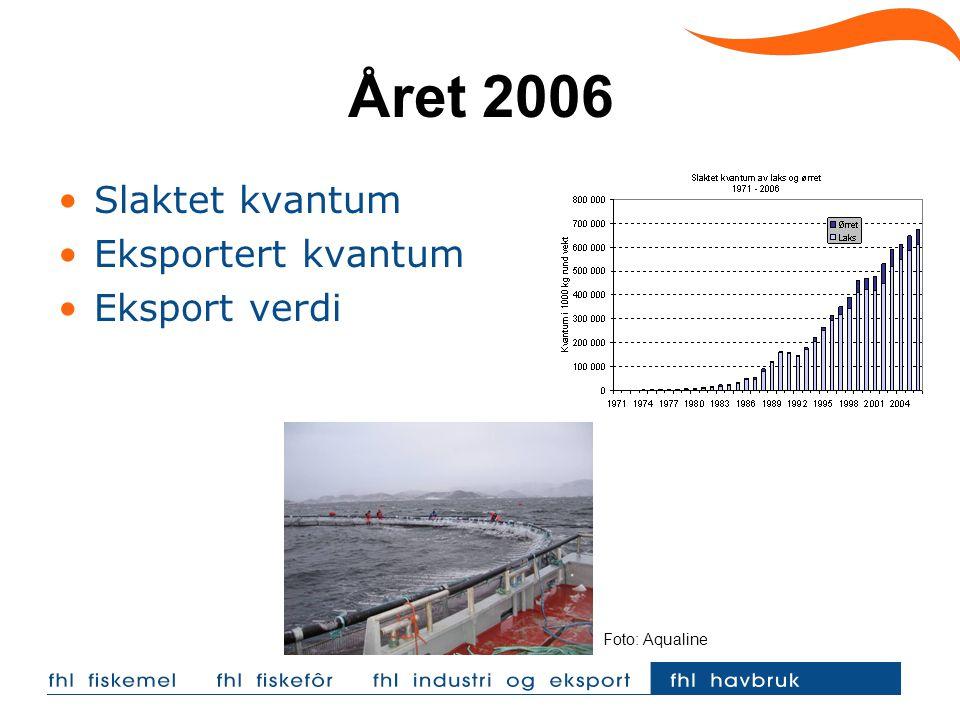 Året 2006 Slaktet kvantum Eksportert kvantum Eksport verdi Foto: Aqualine