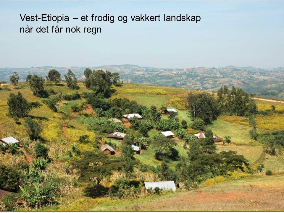 Vest-Etiopia – et frodig og vakkert landskap når det får nok regn