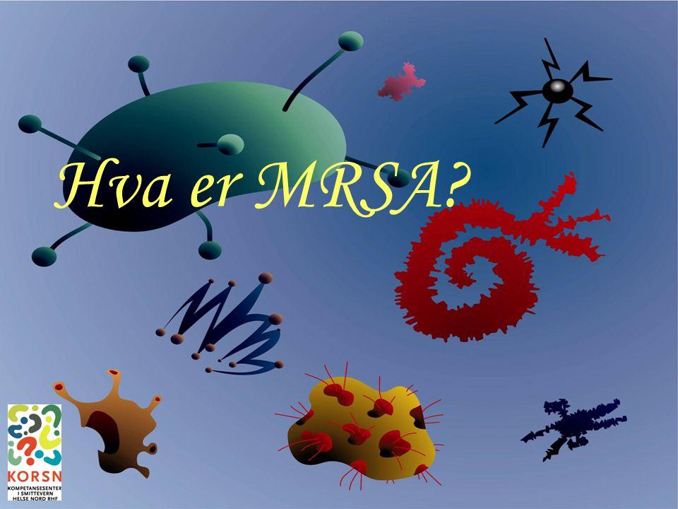 Bodø, 26.sept 200712 Hvorfor hindre MRSA-smittespredning.