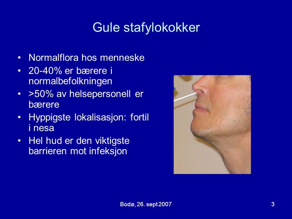 Bodø, 26. sept 20073 Gule stafylokokker Normalflora hos menneske 20-40% er bærere i normalbefolkningen >50% av helsepersonell er bærere Hyppigste loka