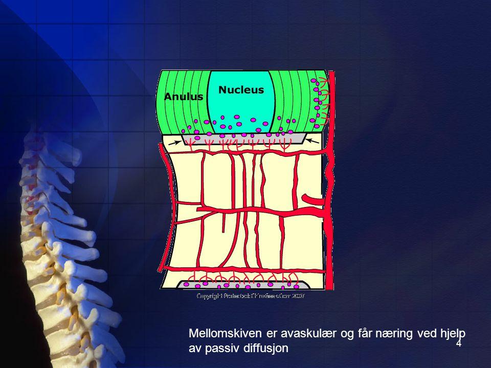 4 Mellomskiven er avaskulær og får næring ved hjelp av passiv diffusjon