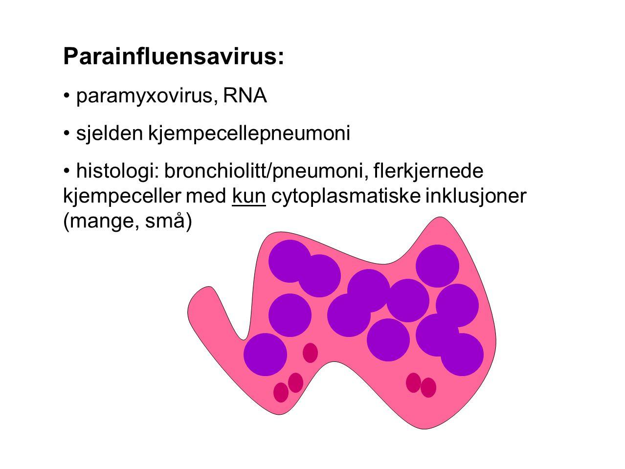 Parainfluensavirus: paramyxovirus, RNA sjelden kjempecellepneumoni histologi: bronchiolitt/pneumoni, flerkjernede kjempeceller med kun cytoplasmatiske inklusjoner (mange, små)