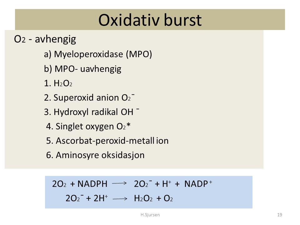 Oxidativ burst O 2 - avhengig a) Myeloperoxidase (MPO) b) MPO- uavhengig 1. H 2 O 2 2. Superoxid anion O 2 ¯ 3. Hydroxyl radikal OH ¯ 4. Singlet oxyge