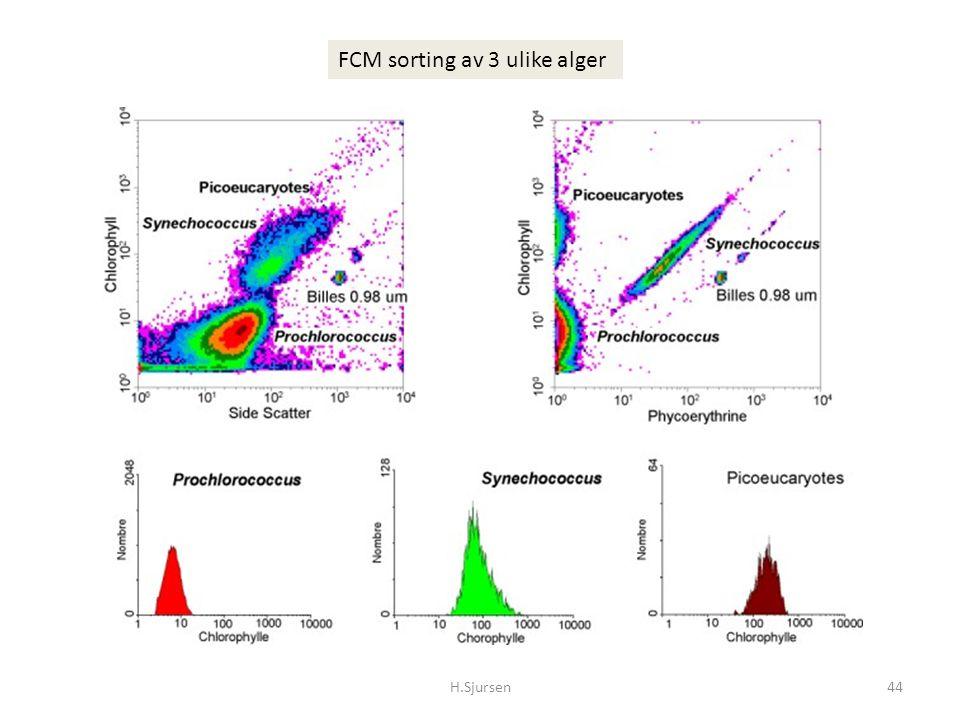 H.Sjursen44 FCM sorting av 3 ulike alger