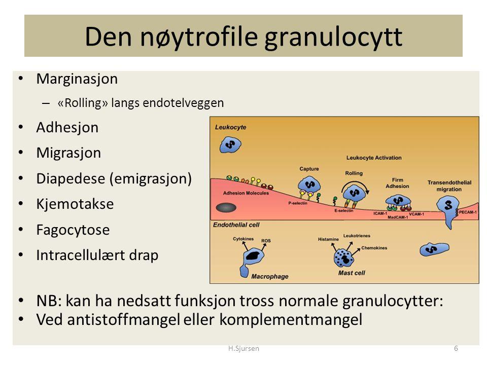 Nøytrofile defekter Defekt i nøytrofil- avhengig immunforsvar Kvantitativ Nøytropeni – den vanligste – Ervervet Medikament indusert Autoimmun Cancer Leukemi – Hereditær Familiær benign (etnisk) nøytropeni Infantil genetisk agranulocytose (Severe congenital neutropenia) Cyklisk nøytropeni H.Sjursen27