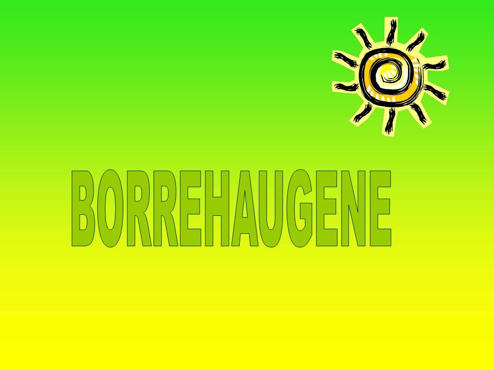 OM BORREHAUGENE I I 1932 ble Borrehaugene en nasjonalpark.