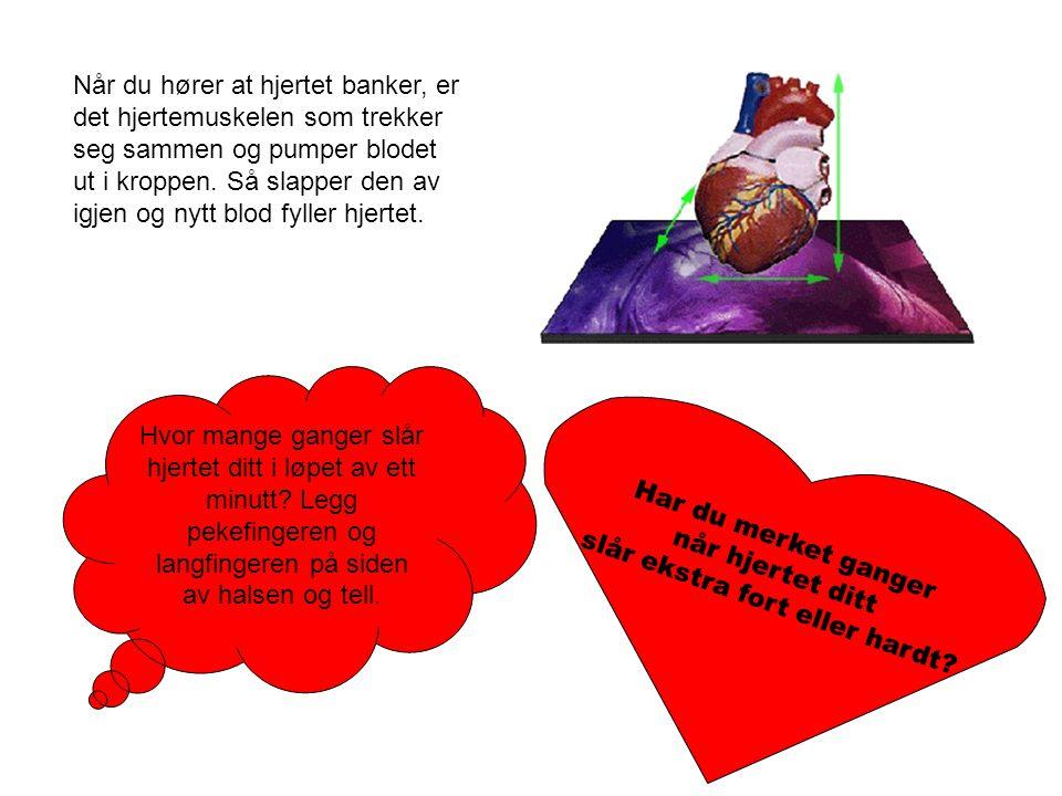 Når du hører at hjertet banker, er det hjertemuskelen som trekker seg sammen og pumper blodet ut i kroppen. Så slapper den av igjen og nytt blod fylle