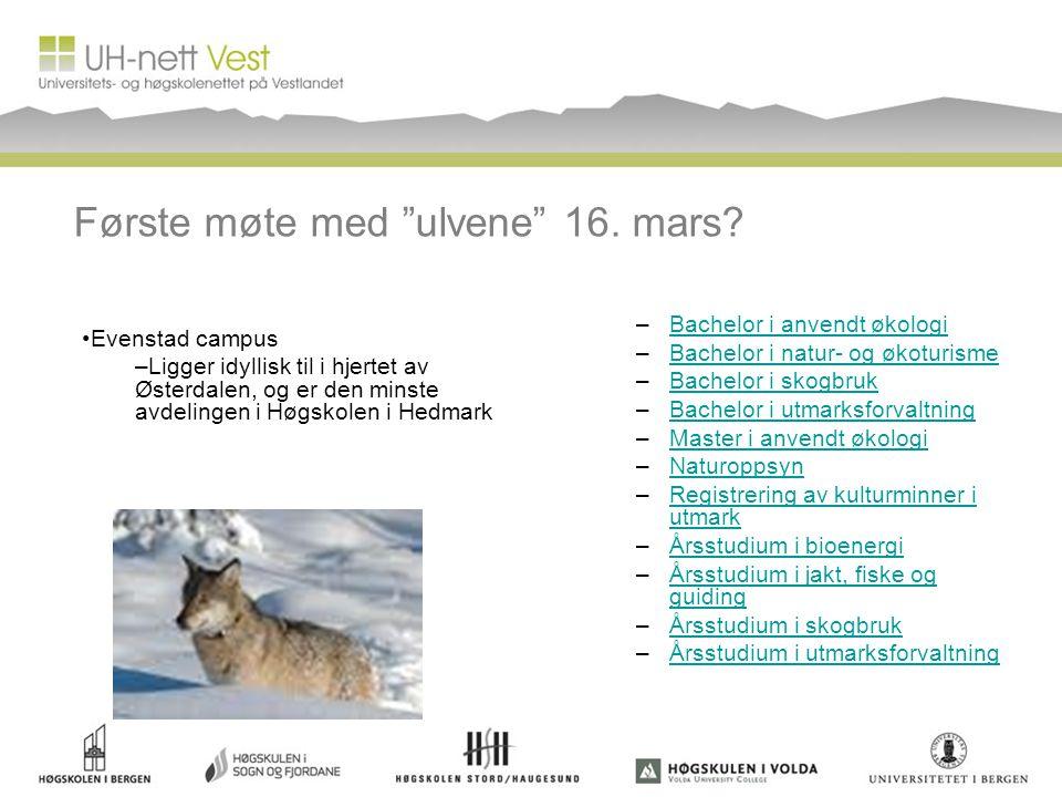 """Første møte med """"ulvene"""" 16. mars? –Bachelor i anvendt økologiBachelor i anvendt økologi –Bachelor i natur- og økoturismeBachelor i natur- og økoturis"""