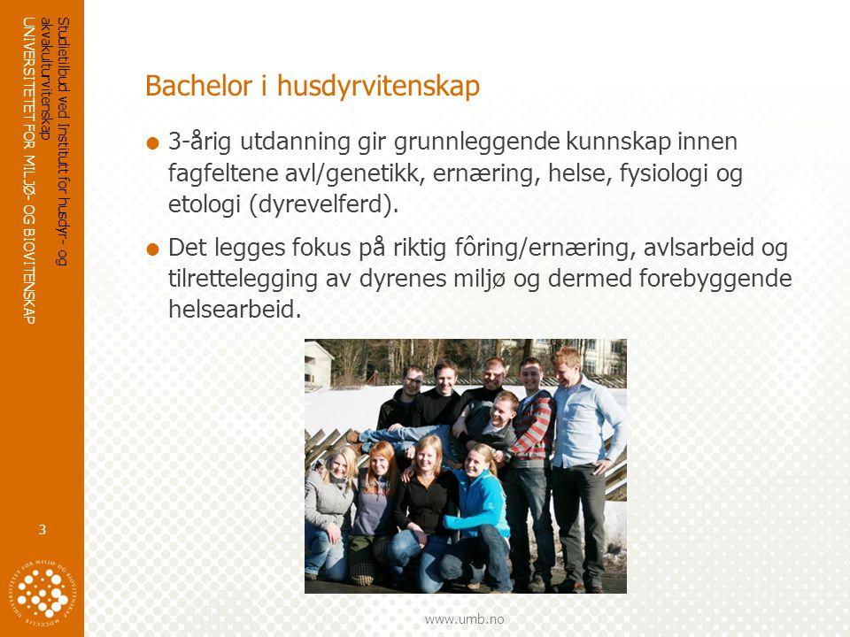 UNIVERSITETET FOR MILJØ- OG BIOVITENSKAP www.umb.no Studietilbud ved Institutt for husdyr- og akvakulturvitenskap 4 Bachelor i husdyrvitenskap  Husdyr inkluderer både produksjonsdyr og kjæledyr  Økonomisk og bærekraftig drift av gårdsdrift er viktig innen norsk matproduksjon  Innsikt i husdyrproduksjon og planlegging  Samspill mellom husdyr og mennesker – alternativ gårdsdrift – grønn omsorg  Kjæledyr/sports- og familiedyr fyller stadig viktige roller i samfunnet