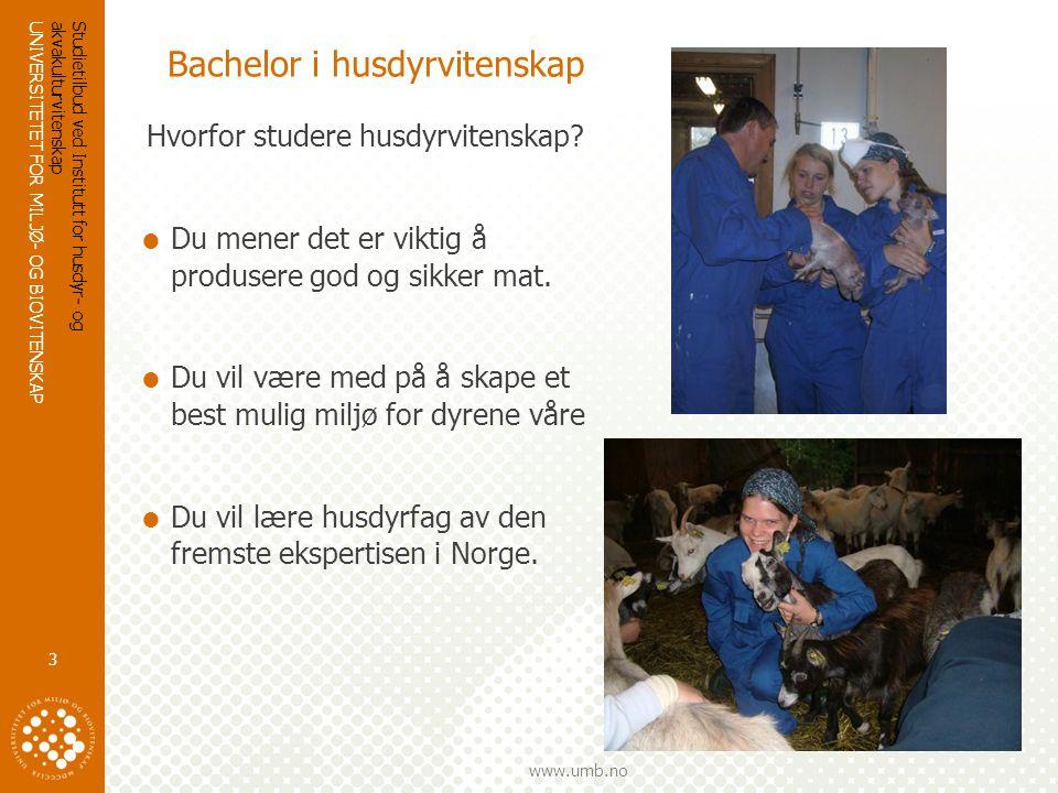 UNIVERSITETET FOR MILJØ- OG BIOVITENSKAP www.umb.no Studietilbud ved Institutt for husdyr- og akvakulturvitenskap 3 Bachelor i husdyrvitenskap Hvorfor studere husdyrvitenskap.