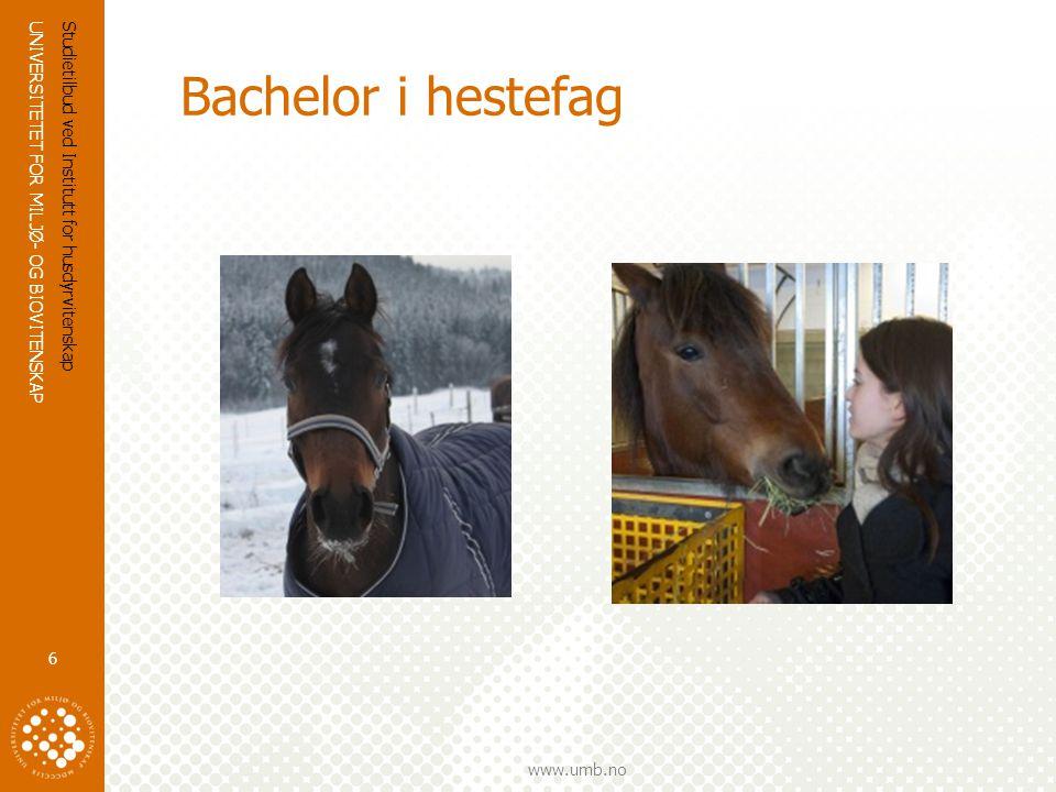 UNIVERSITETET FOR MILJØ- OG BIOVITENSKAP www.umb.no Bachelor i hestefag  Stor interesse for hest og hestesport setter større krav til kvalitet og kunnskap i hestenæringen  Praktisk erfaring i kombinasjon med god teoribakgrunn skaper gode aktører i hestenæringen  Hva lærer du.