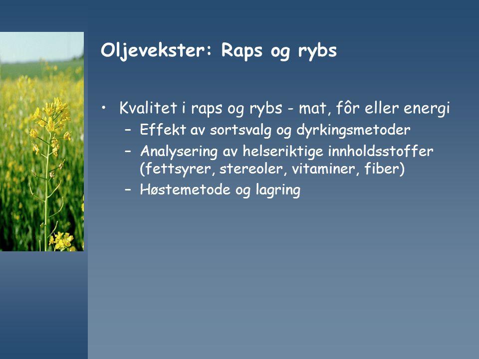 Oljevekster: Raps og rybs Kvalitet i raps og rybs - mat, fôr eller energi –Effekt av sortsvalg og dyrkingsmetoder –Analysering av helseriktige innhold