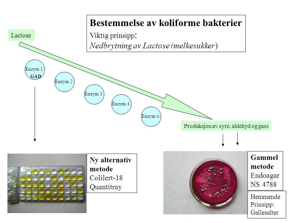 Bestemmelse av koliforme bakterier Viktig prinsipp : Nedbrytning av Lactose (melkesukker) Enzym 1 Enzym 2 Enzym 3 Enzym 4 Enzym x GAD Produksjon av sy
