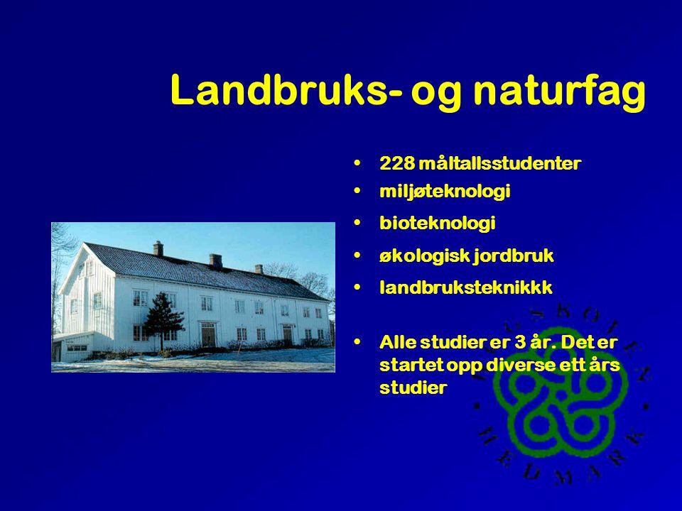 Lærerutdanningen, Hamar and Elverum 1952 måltallsstudenter 4 årig allmennlærerutdanning (samt egen musikklinje) 3 årig førskolelærerutdanning 3 årig f