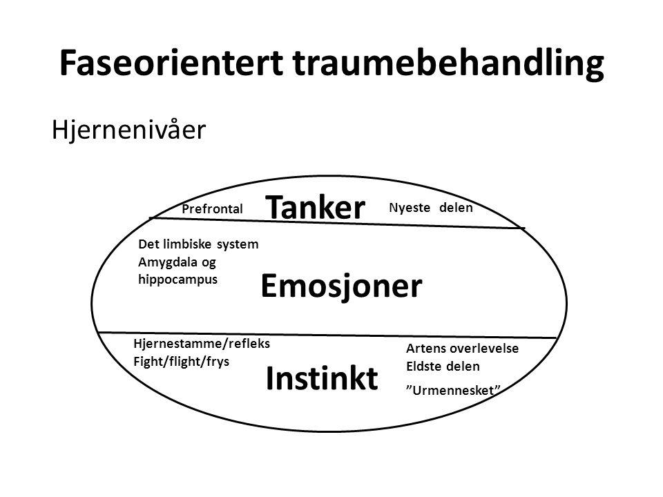 Faseorientert traumebehandling Hjernenivåer Tanker Emosjoner Instinkt Hjernestamme/refleks Fight/flight/frys Artens overlevelse Eldste delen Det limbi