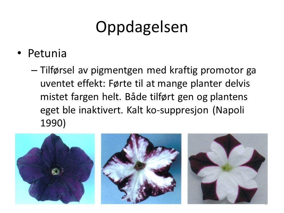 Oppdagelsen Petunia – Tilførsel av pigmentgen med kraftig promotor ga uventet effekt: Førte til at mange planter delvis mistet fargen helt. Både tilfø