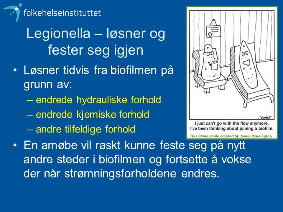 Legionella – løsner og fester seg igjen Løsner tidvis fra biofilmen på grunn av: –endrede hydrauliske forhold –endrede kjemiske forhold –andre tilfeld