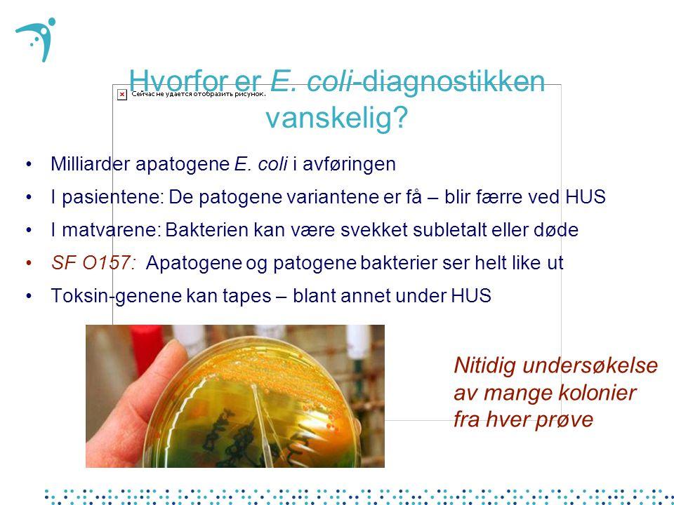 Nitidig undersøkelse av mange kolonier fra hver prøve Hvorfor er E. coli-diagnostikken vanskelig? Milliarder apatogene E. coli i avføringen I pasiente