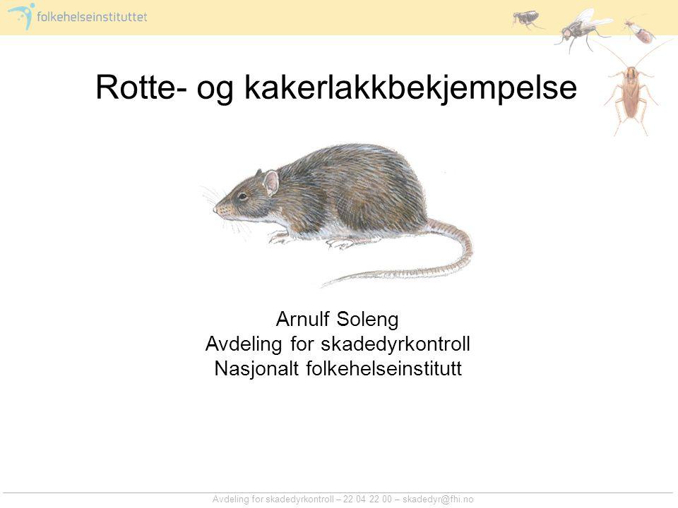 Hvorfor bekjempe rotter og kakerlakker.