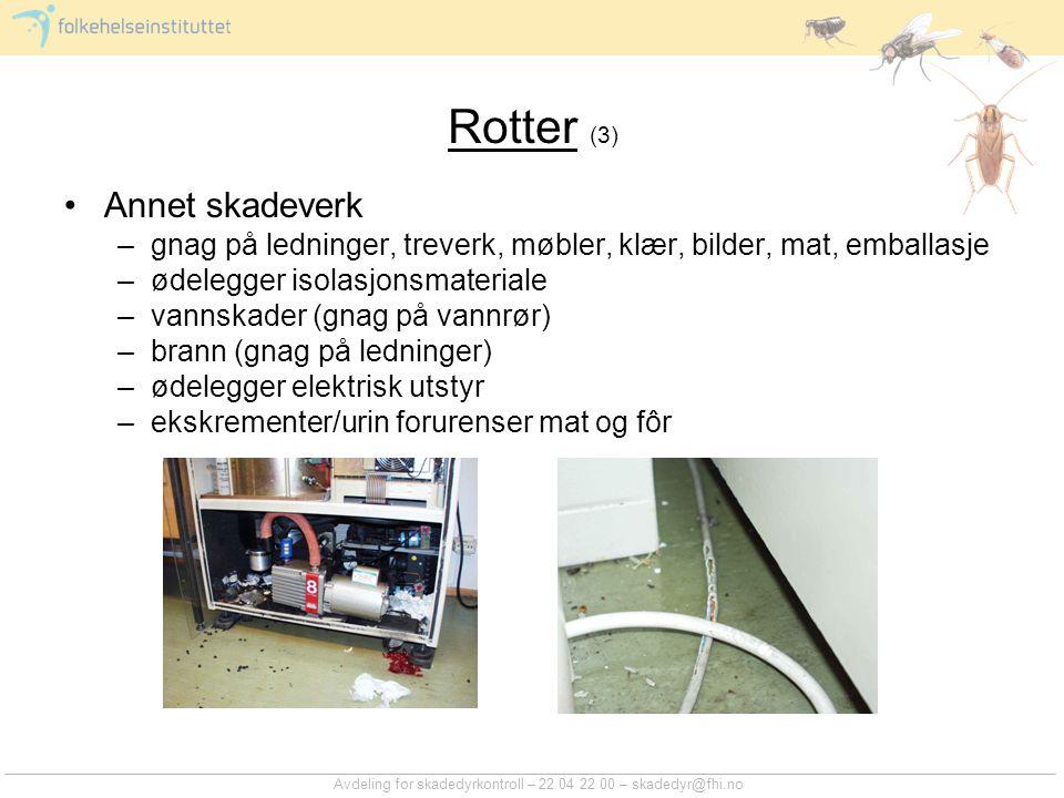 Rotter (4) Sikring Opprydding Bekjempelse –feller –gift resistensproblem.