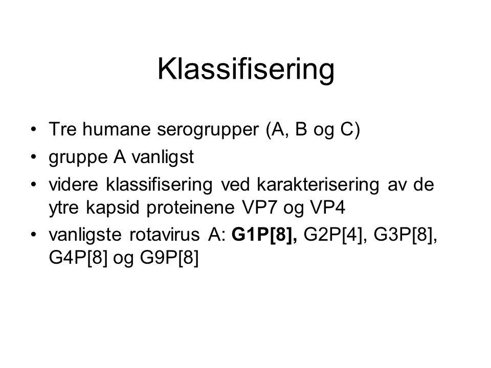 Klassifisering Tre humane serogrupper (A, B og C) gruppe A vanligst videre klassifisering ved karakterisering av de ytre kapsid proteinene VP7 og VP4