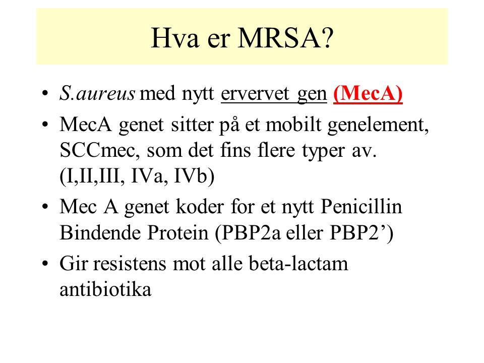 Hva er MRSA? S.aureus med nytt ervervet gen (MecA) MecA genet sitter på et mobilt genelement, SCCmec, som det fins flere typer av. (I,II,III, IVa, IVb