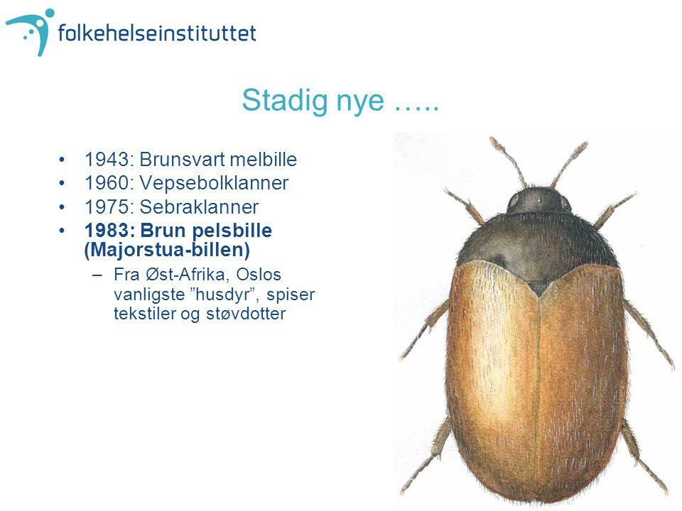 """1943: Brunsvart melbille 1960: Vepsebolklanner 1975: Sebraklanner 1983: Brun pelsbille (Majorstua-billen) –Fra Øst-Afrika, Oslos vanligste """"husdyr"""", s"""
