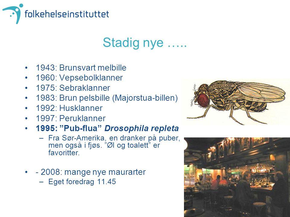 """1943: Brunsvart melbille 1960: Vepsebolklanner 1975: Sebraklanner 1983: Brun pelsbille (Majorstua-billen) 1992: Husklanner 1997: Peruklanner 1995: """"Pu"""