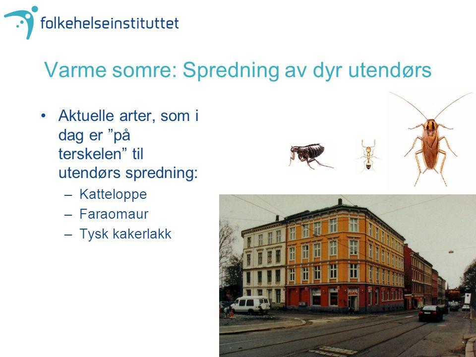 """Varme somre: Spredning av dyr utendørs Aktuelle arter, som i dag er """"på terskelen"""" til utendørs spredning: –Katteloppe –Faraomaur –Tysk kakerlakk"""