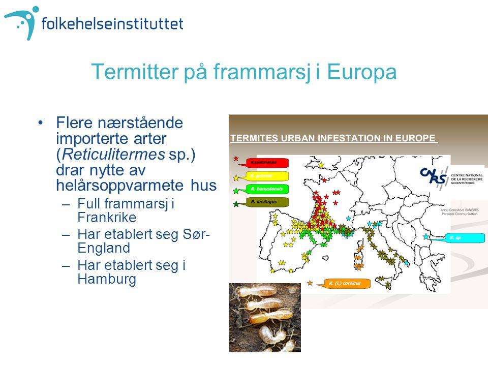 Termitter på frammarsj i Europa Flere nærstående importerte arter (Reticulitermes sp.) drar nytte av helårsoppvarmete hus –Full frammarsj i Frankrike