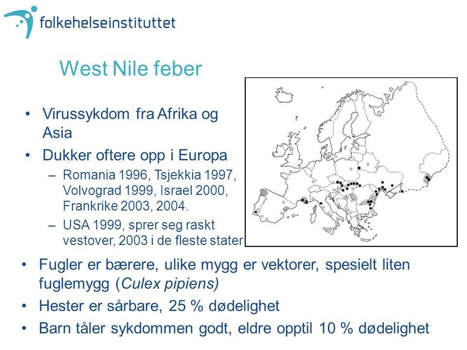 West Nile feber Virussykdom fra Afrika og Asia Dukker oftere opp i Europa –Romania 1996, Tsjekkia 1997, Volvograd 1999, Israel 2000, Frankrike 2003, 2