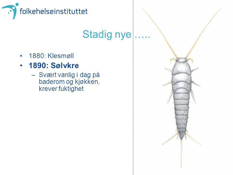 Stadig nye ….. 1880: Klesmøll 1890: Sølvkre –Svært vanlig i dag på baderom og kjøkken, krever fuktighet