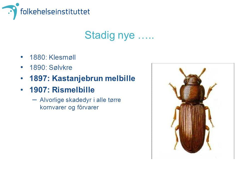 Stadig nye ….. 1880: Klesmøll 1890: Sølvkre 1897: Kastanjebrun melbille 1907: Rismelbille –Alvorlige skadedyr i alle tørre kornvarer og fôrvarer