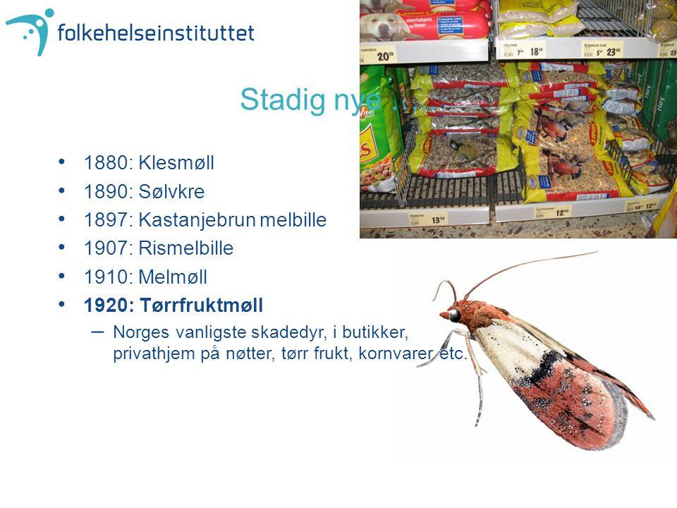 Stadig nye ….. 1880: Klesmøll 1890: Sølvkre 1897: Kastanjebrun melbille 1907: Rismelbille 1910: Melmøll 1920: Tørrfruktmøll –Norges vanligste skadedyr