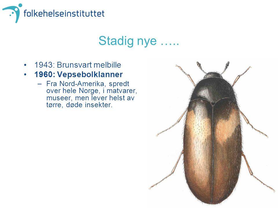 1943: Brunsvart melbille 1960: Vepsebolklanner –Fra Nord-Amerika, spredt over hele Norge, i matvarer, museer, men lever helst av tørre, døde insekter.