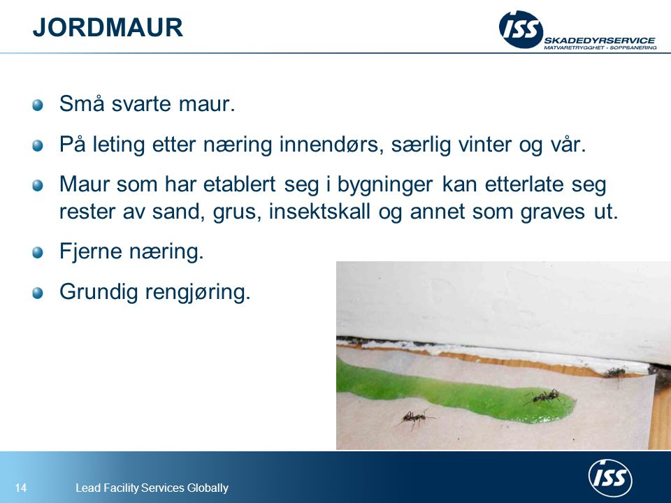 Lead Facility Services Globally15 FARAOMAUR Liten gulaktig maur, ca 2 mm.