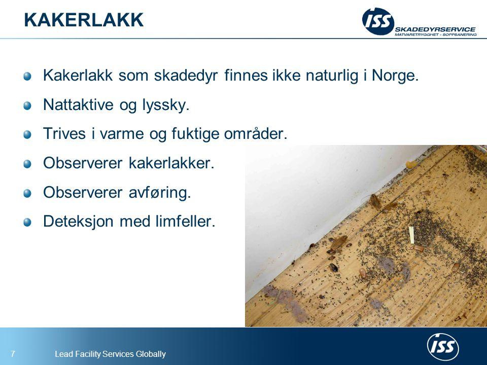 Lead Facility Services Globally7 KAKERLAKK Kakerlakk som skadedyr finnes ikke naturlig i Norge.