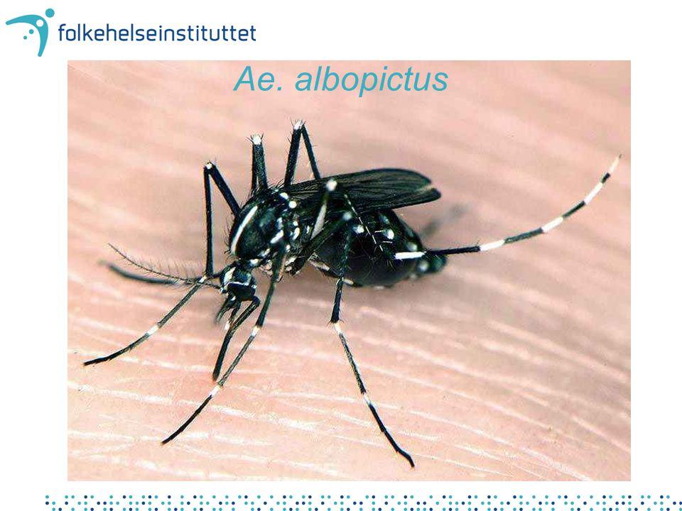Historikk Aedes albopictus stammer fra Asia Har de siste tiårene vært det dyr som sprer seg hurtigst i verden Oppdaget i –Albania 1979 –USA 1985 –Brasil 1986 –Australia og øyer i Stillehavet 1988 –mange afrikanske land 1990 –Italia 1990 –Spania (Barcelona) 1994