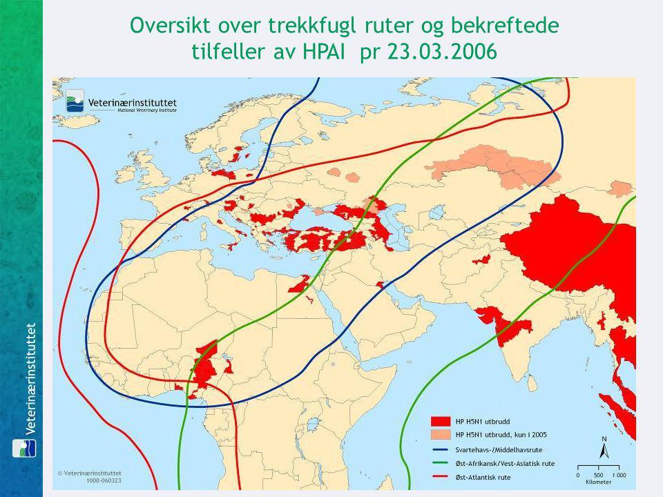 Oversikt over trekkfugl ruter og bekreftede tilfeller av HPAI pr 23.03.2006