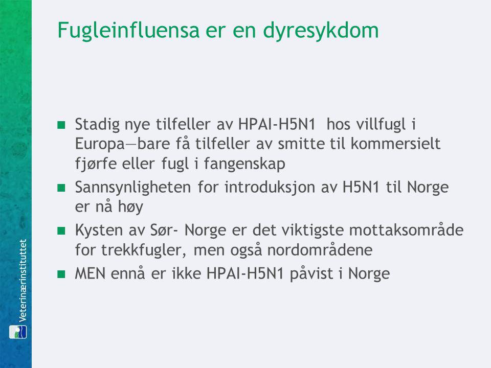 Fugleinfluensa er en dyresykdom Stadig nye tilfeller av HPAI-H5N1 hos villfugl i Europa—bare få tilfeller av smitte til kommersielt fjørfe eller fugl