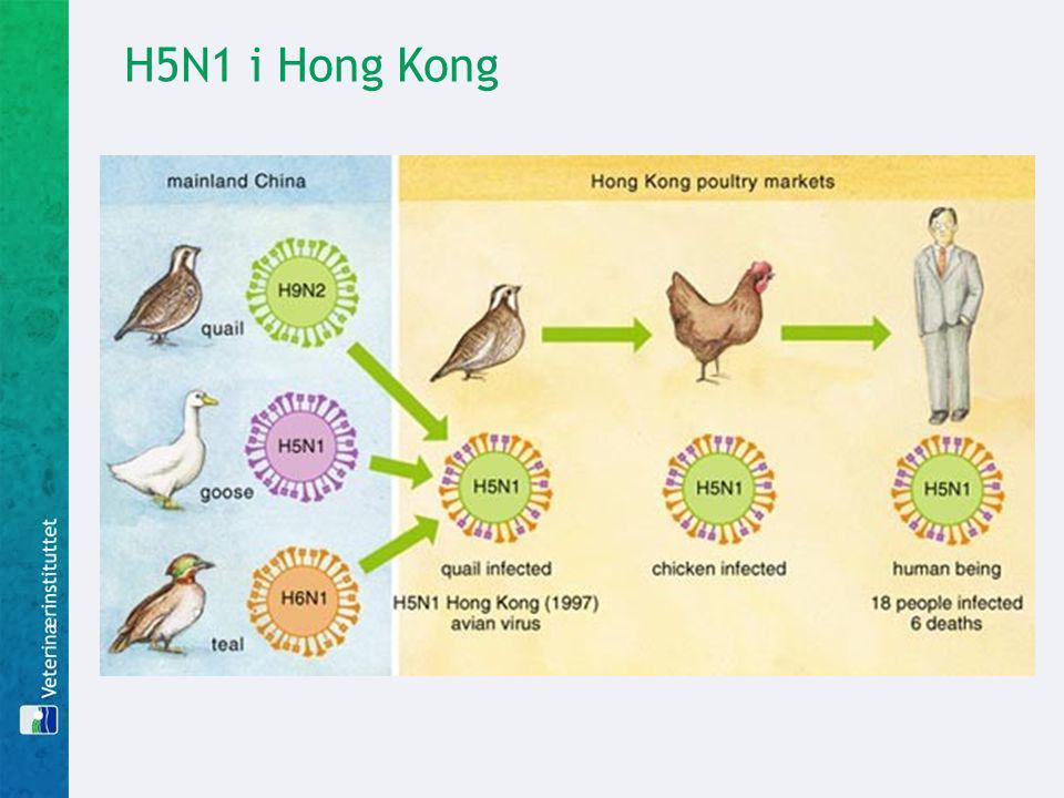 H5N1 i Hong Kong