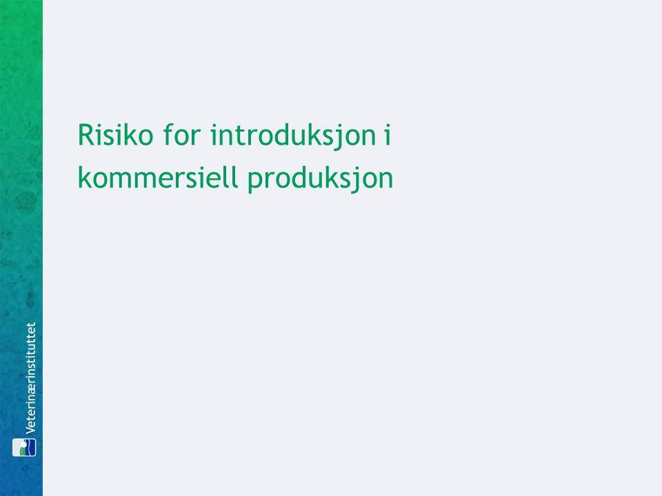 Risiko for introduksjon i kommersiell produksjon